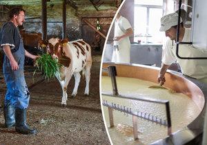 Zemědělce nezneužíváme, brání se řetězce. Na cenu mléka prý nemají vliv