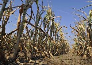 Vláda schválila koncepci boje se suchem.