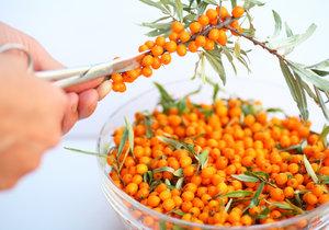 Věděli jste, ře plody rakytníku mají mnohem více vitamínu C, než třeba pomeranče?