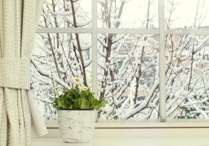 Zima je pro pokojové květiny zatěžkávací zkouškou