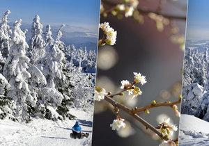 V prosinci bude jak na jaře. Bláznivé počasí si spletlo roční doby