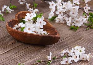 Větvičky obsypané něžnými květy jsou již tradiční adventní ozdobou českých domácností.