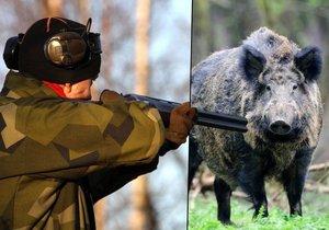 Myslivci budou moci lovit divočáky celoročně.