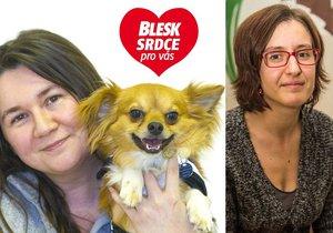 Organizace Pestrá společnost připravuje asistenční psy: Vycvičili i čivavu!