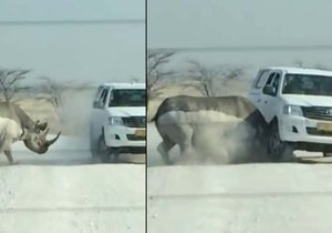 Do turistů na namibijském safari narazil nosorožec.