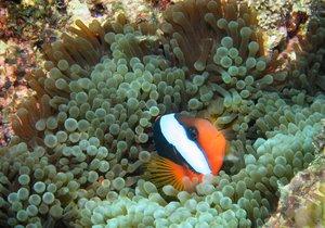 Velký bariérový útes v Austrálii pod je pod ochranou UNESCO. Potápění je tu opravdový zážitek.
