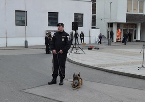 Policejní pes Ade i se svým psovodem