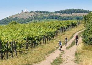 Jižní Morava je vinicemi doslova protkána. Krádeže sazenic příliš časté ale nejsou. Ilustrační foto