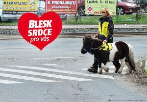První vodicí kůň v Česku: Katrijn umí převést přes přechod
