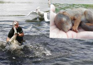 Záchranka pomáhá divokým zvířatům v Praze a blízkém okolí.