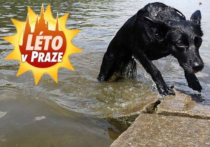 Koupání ve vodě může psa zabít.