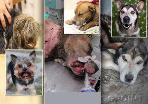 Jak se zachraňují zanedbaní psi? Útulek představuje proměny svých svěřenců