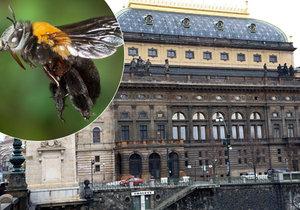 """Milujete med? Ve městě lze chovat roj na střeše, """"včelaří"""" i Národní divadlo"""