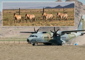 Do Mongolska koně z Česka přivezl letoun CASA. Ten však na na místě poslouží ještě při převozu koní mezi dvěma mongolskými parky.
