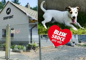 Blesk Srdce po vás: To je Ralfík, nejčastěji vracený pes z útulku