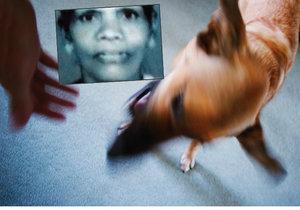 Indku Siluvammu roztrhalo sto hladových psů.