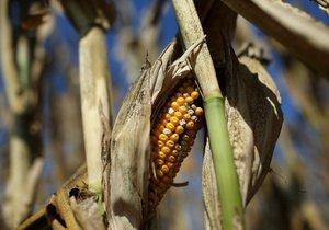 Zemědělci musí čelit tomu, že vody v půdě bude méně.