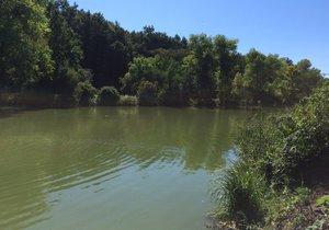 Hořejší rybník v Hloubětíně