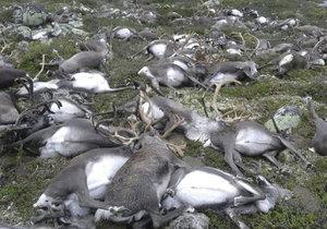 Úder blesku zabil ve středním Norsku stádo více než 300 divoce žijících sobů.