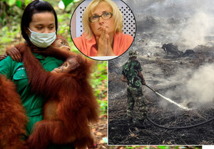 Problémy s pěstováním palmy olejné, ničením pralesů a umíráním živočichů řešili i v Bruselu. Na akci pod záštitou české europoslankyně Konečné (v kroužku).