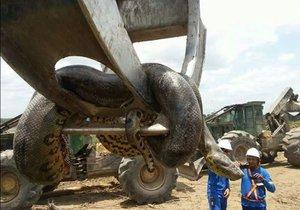 Na stavbě v Brazílii našli 10metrovou anakondu.
