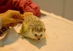 Záchranná stanice pro volně žijící živočichy v Praze měla loni mnohem více práce.