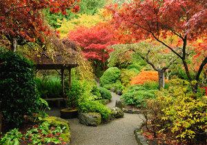 Podzim dokáže zahrady vybarvit lépe, než leckterý malíř.