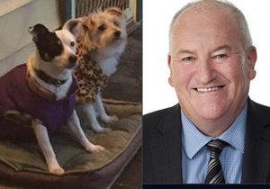 Australský politik převážel své 2 psy za peníze daňových poplatníků.