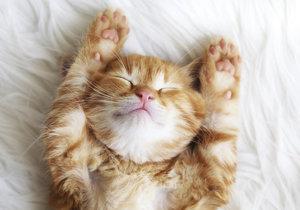 Už jste se přihlásili do soutěže Kočka Česka?