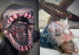Ruský rybář Roman Fedortsov chytá děsivé mořské potvory.