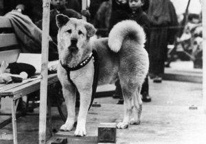 Pes Hačikó je považován za symbol věrnosti.