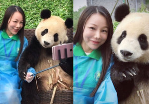 Fotogenická panda se stala hitem v Číně.