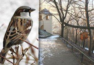 Na Vítkově najdete zhruba 20 krmítek pro nejrůznější ptáky.