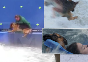 Šokující video z natáčení filmu Psí poslání: Člen štábu málem utopil psa a všichni se tomu smáli!