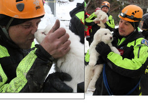 Zázrak v pohřbeném italském hotelu: Záchranáři vytáhli nečekané přeživší, tři chlupatá štěňátka.