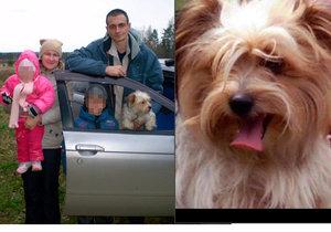 Krutí rodiče nechali psa umrznout na letišti: Nevpustili je s ním do letadla