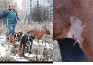 Zuzanu Dvořáčkovou s fenkami napadla prasata na tomto místě, sotva 100 metrů od domu, kde bydlí.