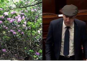 V Irsku se přemnožily rododendrony. Problém možná bude řešit armáda.