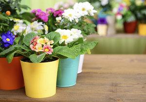 Jak pečovat o jarní květiny v interiéru