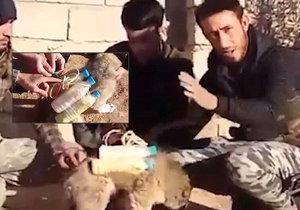 Nová taktika tyranů z ISIS: Pás s výbušninami připevnili na nebohé štěňátko