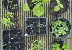 Je čas začít sázet rostlinky!