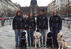 Vodicí psi pomáhají nevidomým v každodenních situacích jako je převádění přes ulici či určování směru chůze.