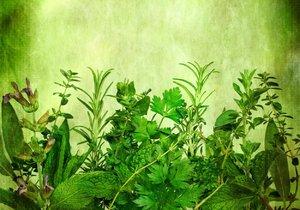Pěstovat bylinky můžete i v bytě.
