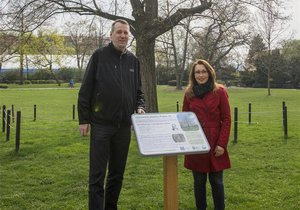 Památné stromy v Praze 10: Připomínají starostu, republiku i okupaci