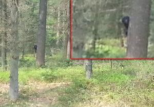 Je toto opravdový Bigfoot, který byl zachycen v Nizozemsku?