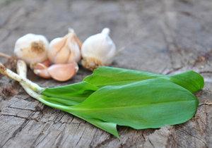 Česnekové a cibulové bylinky: Které jsou léčivé a které skvěle chutnají?