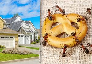 Jak vyhnat mravence z domu?
