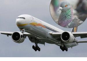 Kvůli srážce letadla s ptákem nemáte podle Evropské unie nárok na odškodnění.
