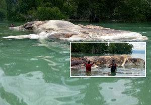 V Indonézii vyplavilo moře monstrum.