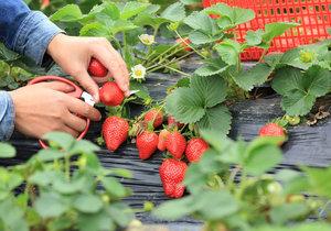 Jak si zajistit dobrou úrodu ovoce?